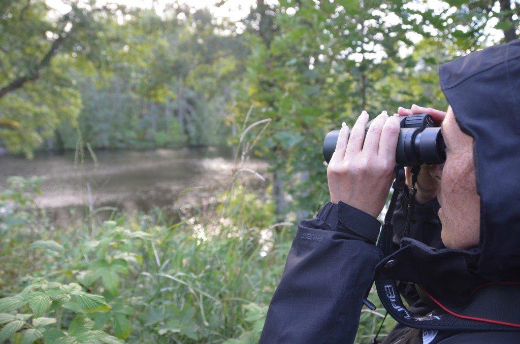 Beaver spotting